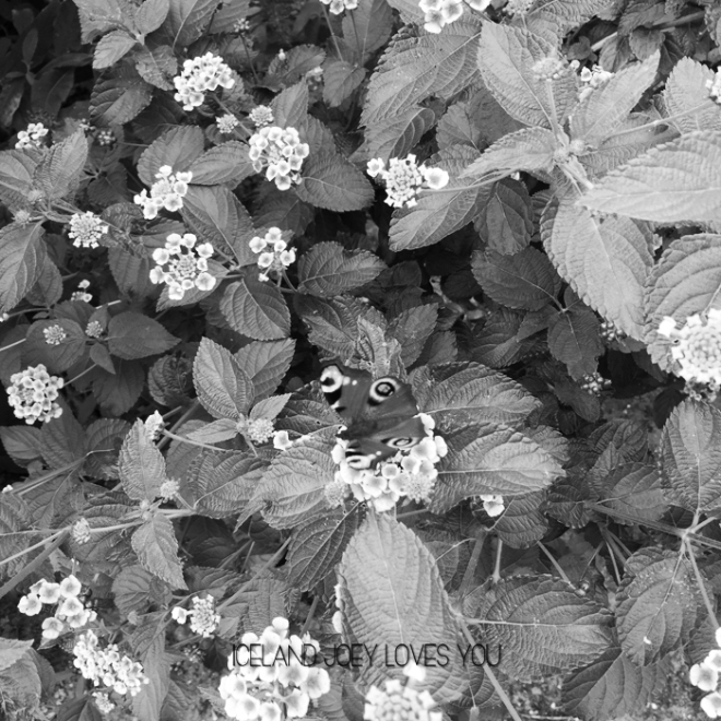 bloemen-plus-vlinder-jpeg-black-white